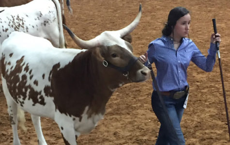 Reagan Powers, 10, shows one of her cattle