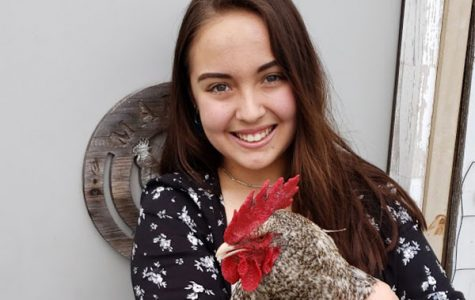 Madison Asato, 12, poses with her chicken.