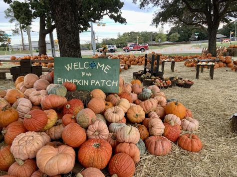 Pumpkins are stacked and prepared for families to take fall photos. The pumpkin patch is open daily until October 31.