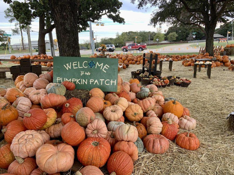 Pumpkin Patch Opens in Mansfield