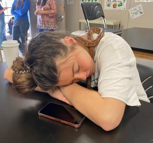 Paige Johnson, 11, sleeps at Ben Barber with Rose, the corn snake, in Mr. Saenz's small animal management/equine science class. The class took a mental health day and relaxed. (Riley Lassiter Photo)