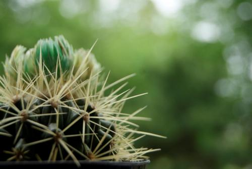My pet, Cactus Jack, like so many others, is waiting for the sun to come out. The forecast for the rest of the week is rainy and cloudy which means no sunbathing. (Catherine Walworth Photo)